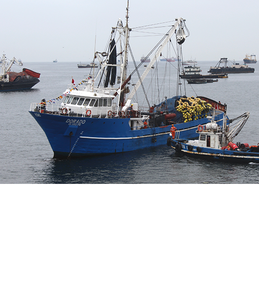 Primera temporada de pesca 2017 termina con una captura del 86%
